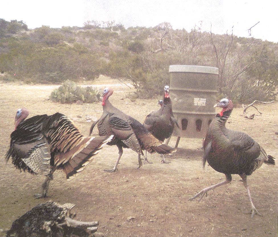 WTGF TURKEY FEEDER